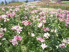 f:id:mikawakinta63:20080724104409j:image