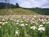 f:id:mikawakinta63:20080724105448j:image