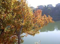 f:id:mikawakinta63:20081203091845j:image
