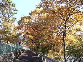 f:id:mikawakinta63:20081203092047j:image