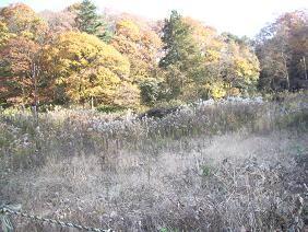f:id:mikawakinta63:20081204141524j:image