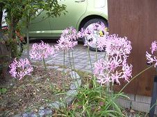 f:id:mikawakinta63:20081209085344j:image