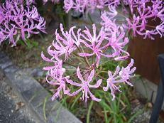 f:id:mikawakinta63:20081209085411j:image