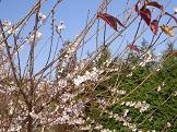 f:id:mikawakinta63:20081210132331j:image