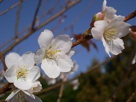 f:id:mikawakinta63:20081210132433j:image