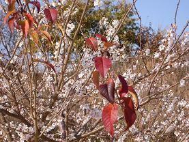 f:id:mikawakinta63:20081210132511j:image