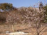 f:id:mikawakinta63:20081210132749j:image