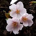 f:id:mikawakinta63:20081210200700j:image