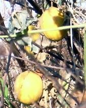 f:id:mikawakinta63:20081216135900j:image