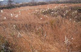 f:id:mikawakinta63:20081218112924j:image