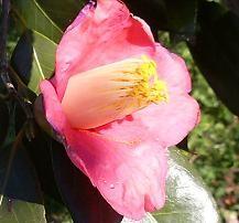 f:id:mikawakinta63:20081226094727j:image