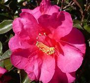 f:id:mikawakinta63:20081226101104j:image