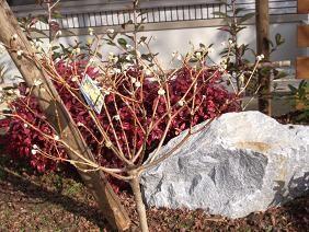 f:id:mikawakinta63:20081228103314j:image