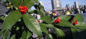 f:id:mikawakinta63:20090103094817j:image