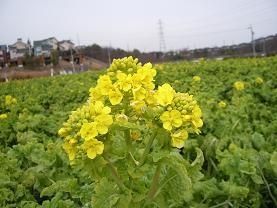 f:id:mikawakinta63:20090120140656j:image