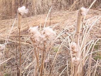 f:id:mikawakinta63:20090120141457j:image