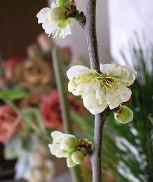 f:id:mikawakinta63:20090123142427j:image