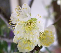 f:id:mikawakinta63:20090123142501j:image
