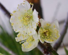 f:id:mikawakinta63:20090123142619j:image