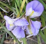 f:id:mikawakinta63:20090127141918j:image