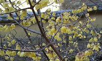 f:id:mikawakinta63:20090128133439j:image