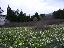 f:id:mikawakinta63:20090427111315j:image