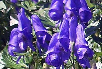 f:id:mikawakinta63:20090901131252j:image
