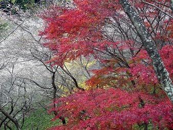 f:id:mikawakinta63:20091116153642j:image