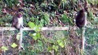 f:id:mikawakinta63:20091216133037j:image