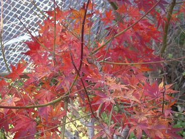f:id:mikawakinta63:20091217113627j:image