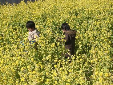 f:id:mikawakinta63:20100207111425j:image