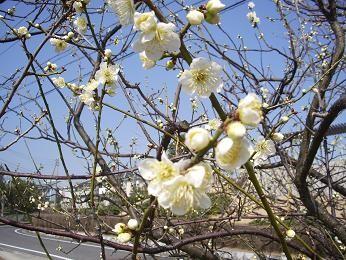 f:id:mikawakinta63:20100224121443j:image