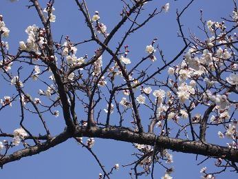 f:id:mikawakinta63:20100224121750j:image