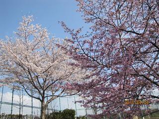 f:id:mikawakinta63:20100404153822j:image