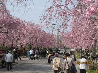 f:id:mikawakinta63:20100407142007j:image
