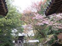 f:id:mikawakinta63:20100412104158j:image