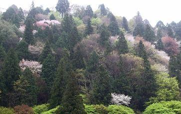f:id:mikawakinta63:20100412150232j:image