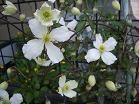 f:id:mikawakinta63:20100418134424j:image