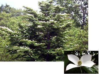 f:id:mikawakinta63:20100612211915j:image