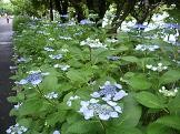 f:id:mikawakinta63:20100620100127j:image