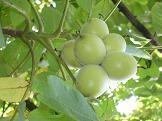 f:id:mikawakinta63:20100624114004j:image