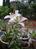 f:id:mikawakinta63:20100625085009j:image