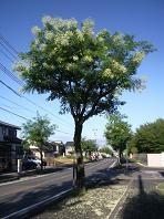 f:id:mikawakinta63:20100804065200j:image