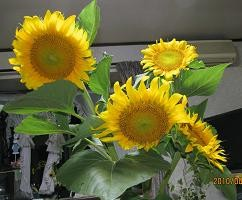 f:id:mikawakinta63:20100804193141j:image