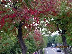 f:id:mikawakinta63:20101024140432j:image