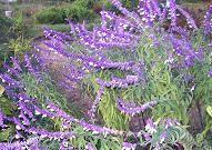 f:id:mikawakinta63:20101027083816j:image