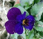 f:id:mikawakinta63:20110220134721j:image