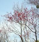 f:id:mikawakinta63:20110402111625j:image