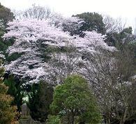 f:id:mikawakinta63:20110408141139j:image