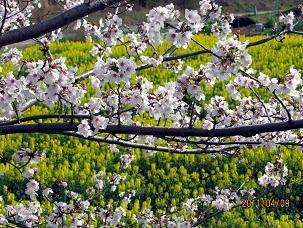 f:id:mikawakinta63:20110409154615j:image